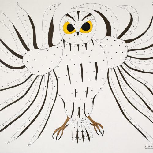 Owl Drawing - Ooloosie Saila